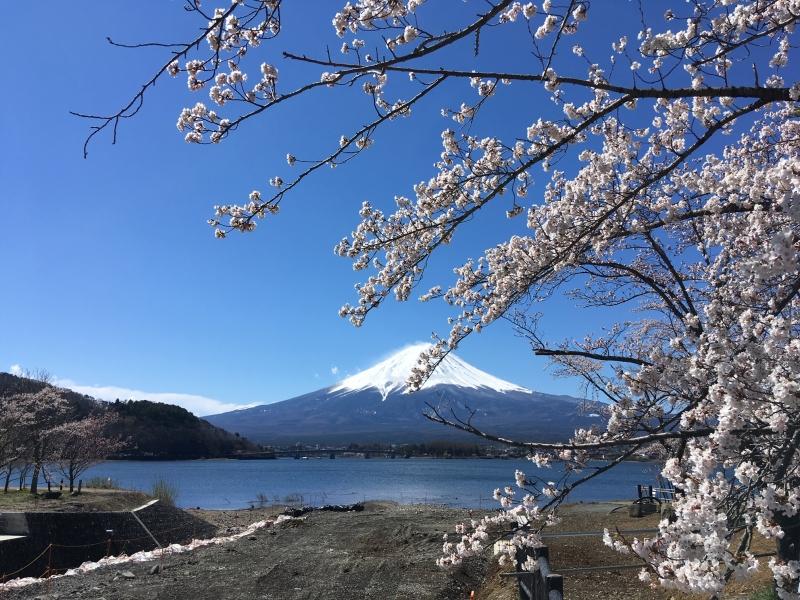 Lake Kawaguchi and cherry blossoms