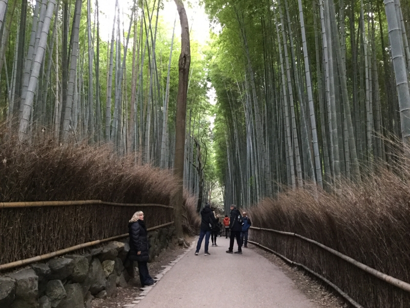 Sagano (Bamboo Forest, very popular for foreign tourists)