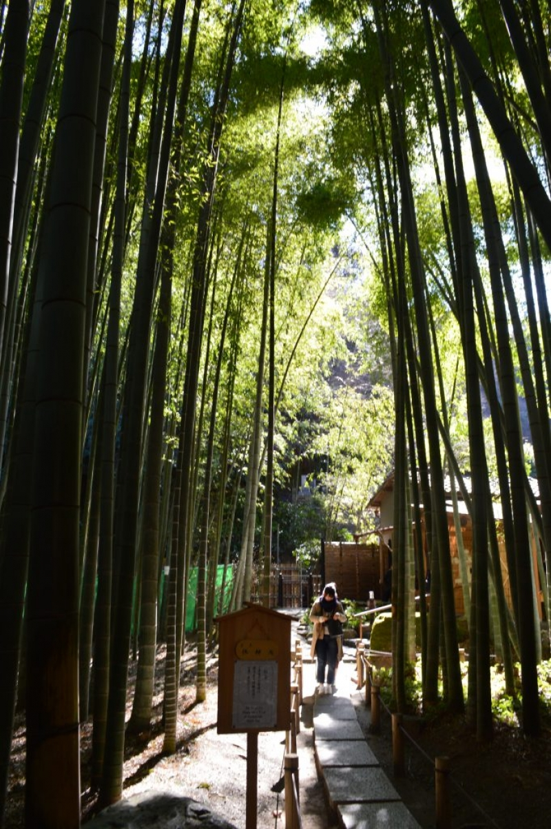 Hokokuji Temple is well known as Bamboo Temple.  You can enjoy a bamboo garden in a quiet atmosphere.