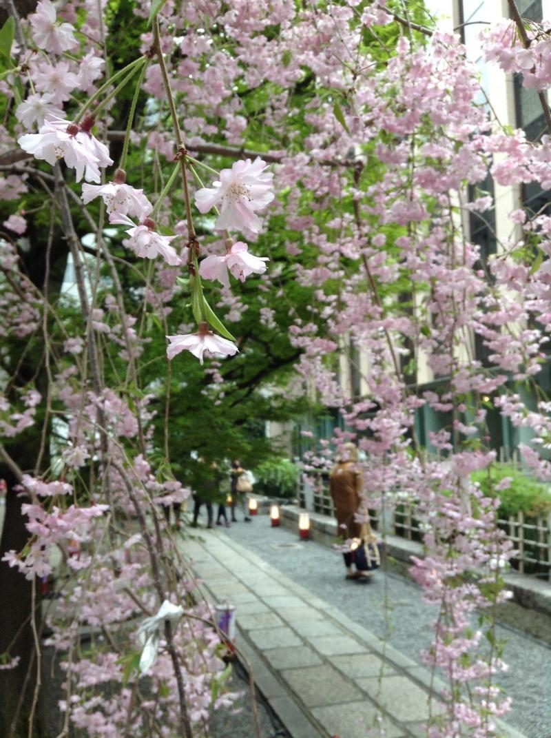 Rokaku-do temple's cherry blossom
