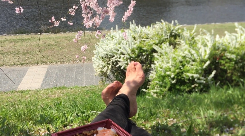 Eat some bento or sushi roll from Izuju at Kamogawa river