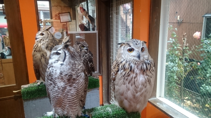 The Owl Cafe in YANAKA