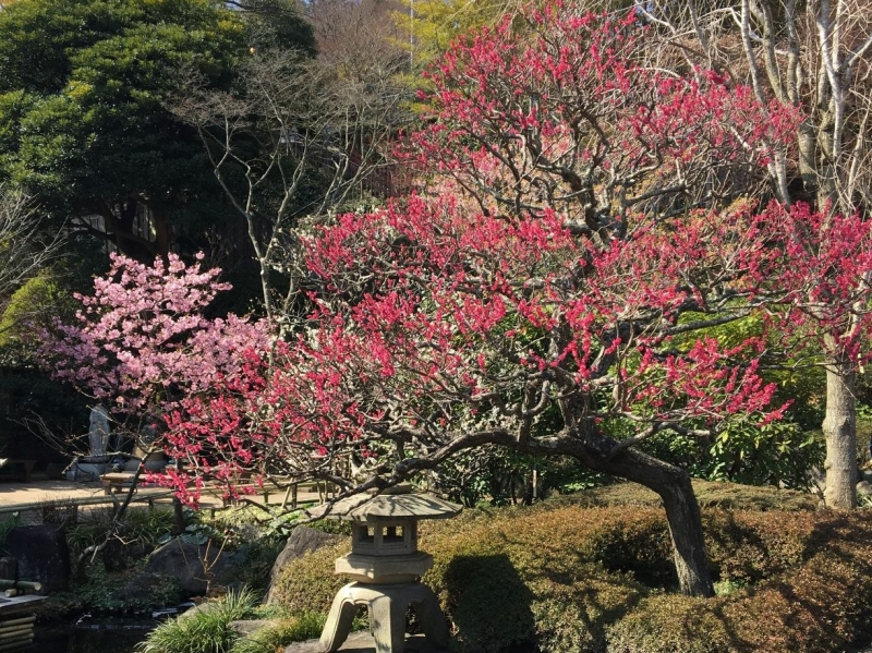 In Hasedera temple, you can enjoy seasonal flowers and sea views.