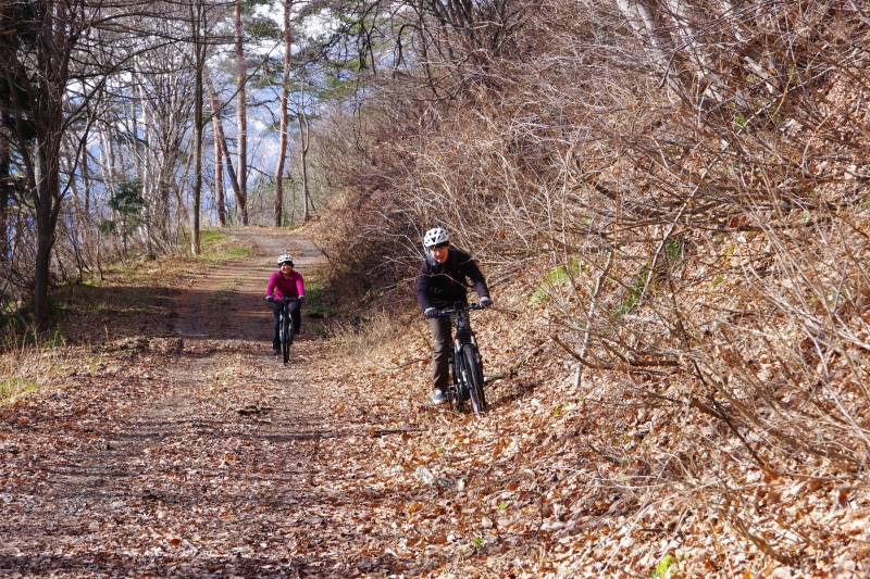 Riding in the forest trail