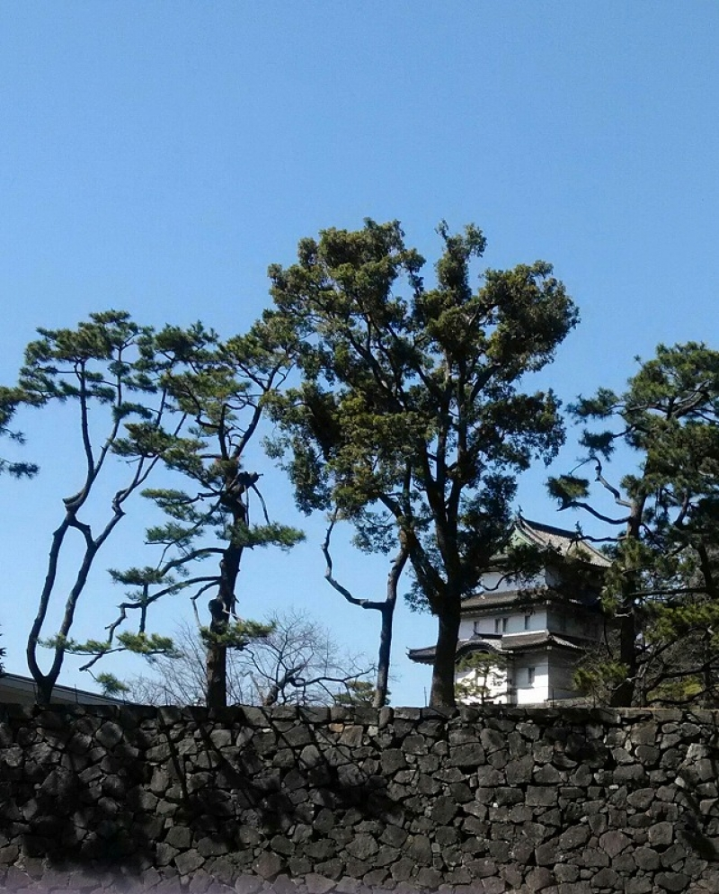 Covered with a lot of pine trees, taking part in a tour in English for walking around inside the imperial palace.