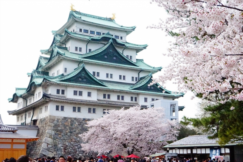 Nagoya castle with Sakura/Cherry blossoms.