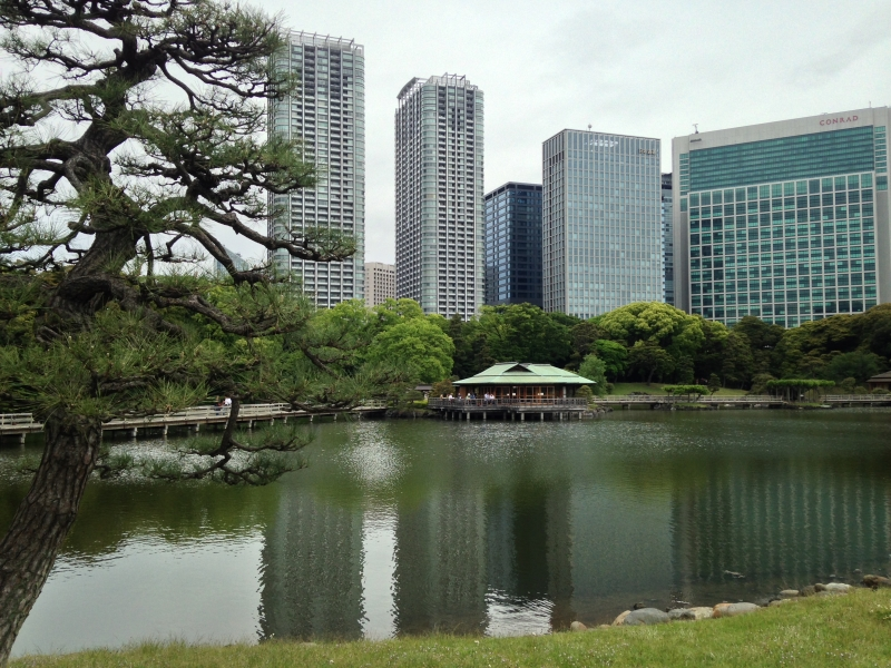 Hama Rikyu Garden This garden is situated near from buildings which create beautiful contrast between modern high-rise buildings and old traditional garden.  This is a Oasis for business workers leading stressful work in Tokyo.