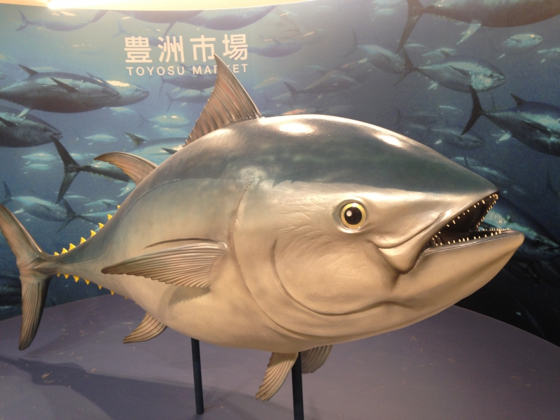 Toyosu Fish Market This is the replica of the largest Pacific Blue Fin Tuna auctioned at Tsukiji fish market. This replica is placed at the entrance of Fish Wholesale Market of Toyosu market. This huge replica is waiting for your visit!!