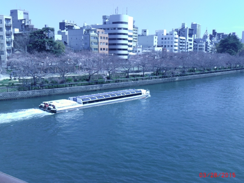 Oukawa river / Spring has come. Cherry blossoms are blooming.