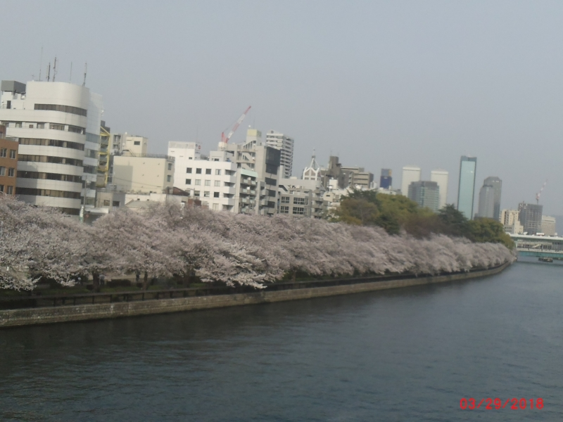 Oukawa river of Cherry season