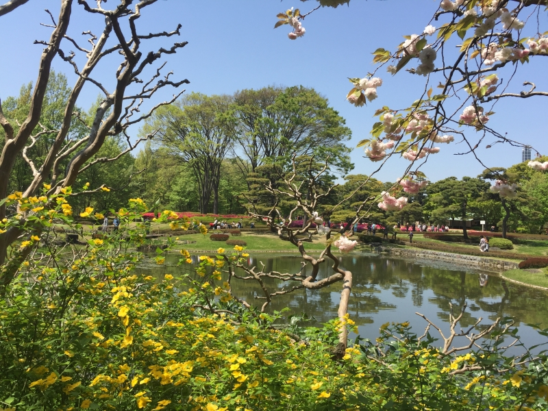 (option) East Gardens of Imperial Palace has seasonal beauty throughout the year.