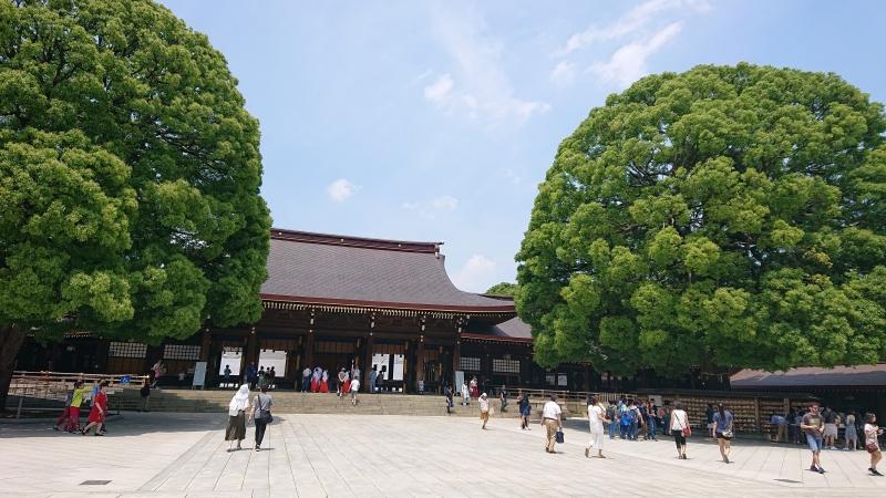 El santuario principal de Meiji jingu con dos gigantes alcanforeros( mas de cien anyos de edad)