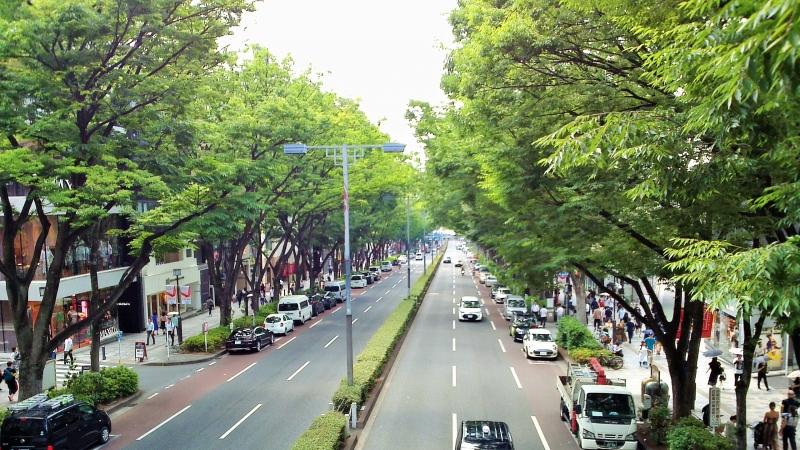Omotesando es la avenida donde hay tiendas de prestigiosas marcas y amibiente relajante