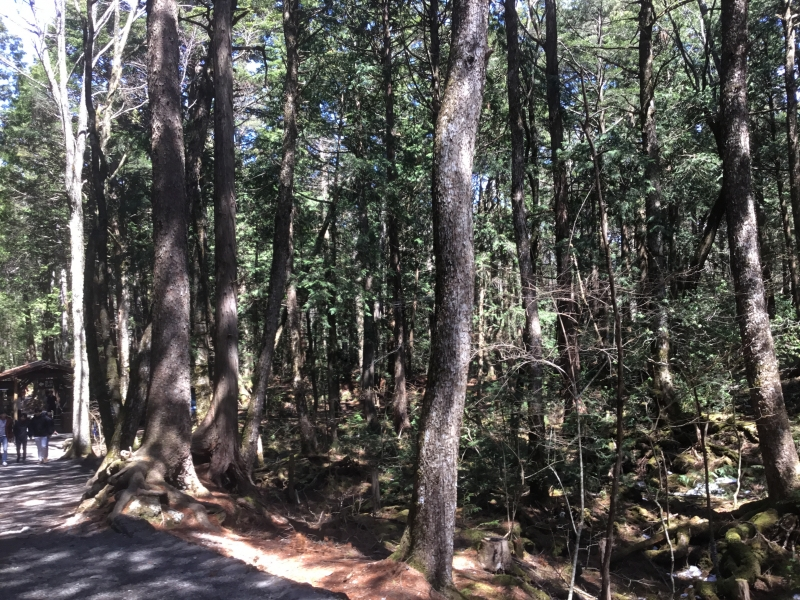 Infinite caves in the area of Aokigahara-sea of trees located on the foot of Mt.Fuji.