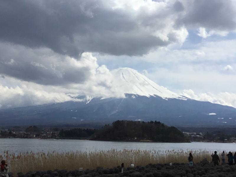 Ohishi park located in Lake Kawaguchi area where you can enjoy various beautiful flowers