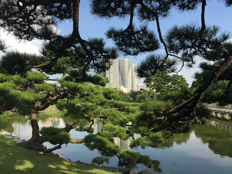 Hamarikyu Gardens boasts contrast between traditional beauty of nature and high-rise Shiodome district buildings.
