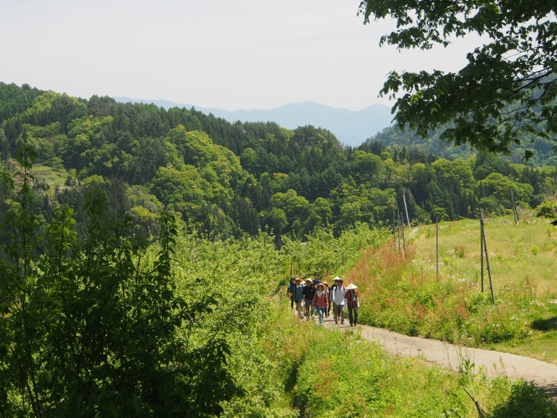 Togakushi Pilgrimage Trail Walking Tour