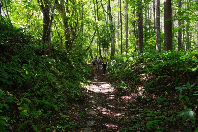 Togakushi Pilgrimage trail walking