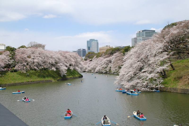 Chidorigafuchi Park Chidorigafuchi is the biggest moat at the Imperial Palace. 700m long Chidorigafuchi pedestrian walkway will be covered with many kinds of the cherry blossoms, such as the pale pink Somei-yoshino blossoms and the rich pink Yamazakura blossoms in spring.