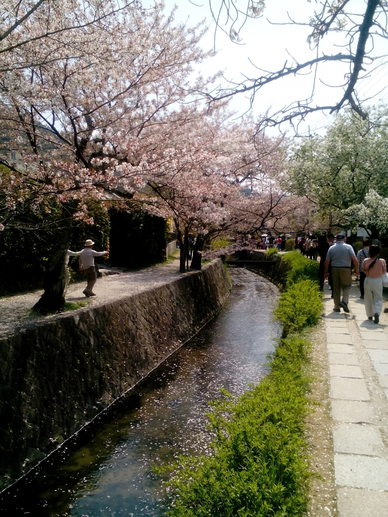 Stroll for about one hour looking at cherry blossoms or maple trees at Philosopher's' path in April. In fall, you can enjoy red maple trees alongside the streem.