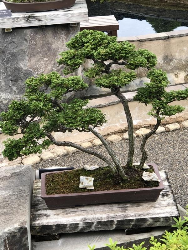Bonsai Garden Tour