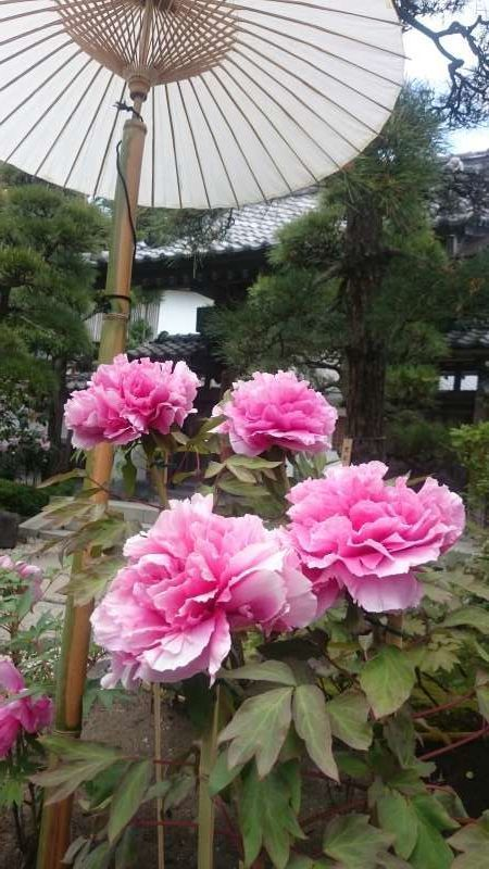 One day- Private Tour based on your requests in Kamakura