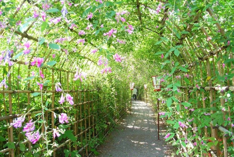 A lovely, peaceful small botanical garden where you can find Japanese flowers and wildlife