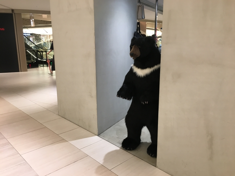 You see Japanese balck bear in the middle of GINZA!!