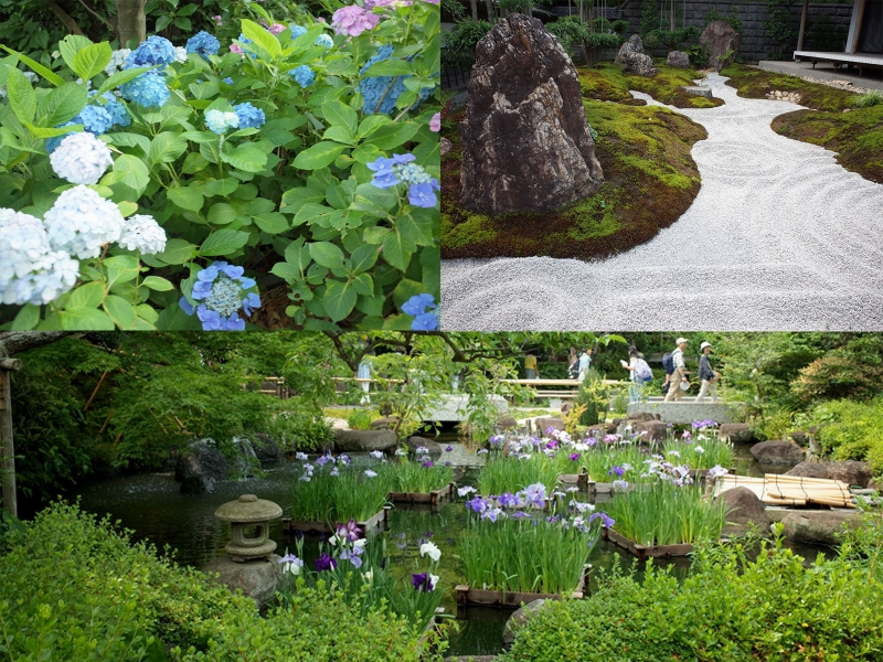 Hasedera : Hydrangea trail in June. You can see something beautiful all year round.