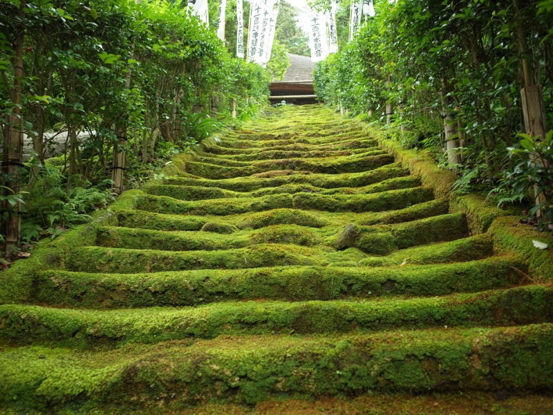 【Nature-2】Sugimoto-dara, a small quiet temple near bamboo temple. Moss stair is impressive.