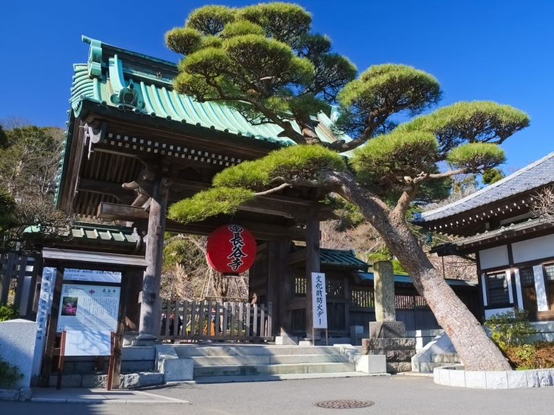 Hasedera Temple :  One of the oldest and prettiest temples in Kamakura, housing eleven-headed statue of Kannon, the goddess of mercy (9.18m) .