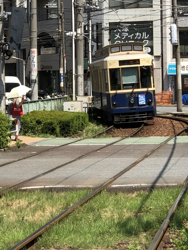 Streetcar running under cherry blossoms in spring