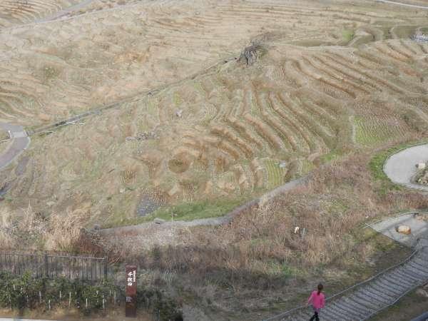 Senmaida terraced rice paddy fields.