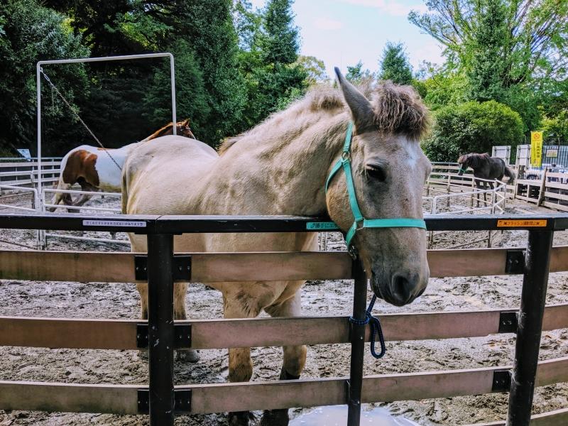 the Pony park ;)