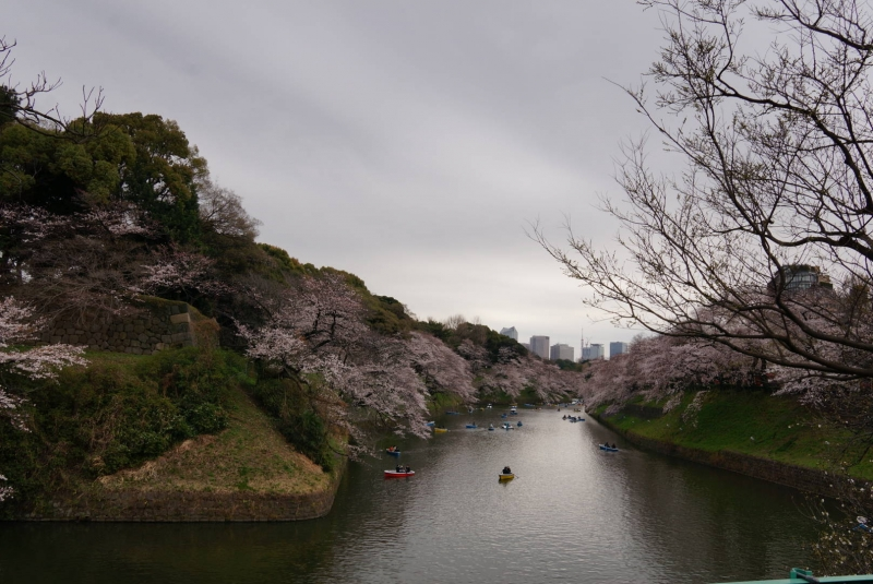 The Imperial palace in cherry blossom season