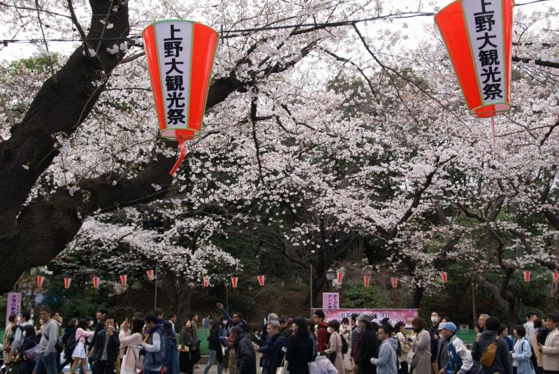 Onanami (cherry blossom viewing ) at Ueno Metropolitan Park