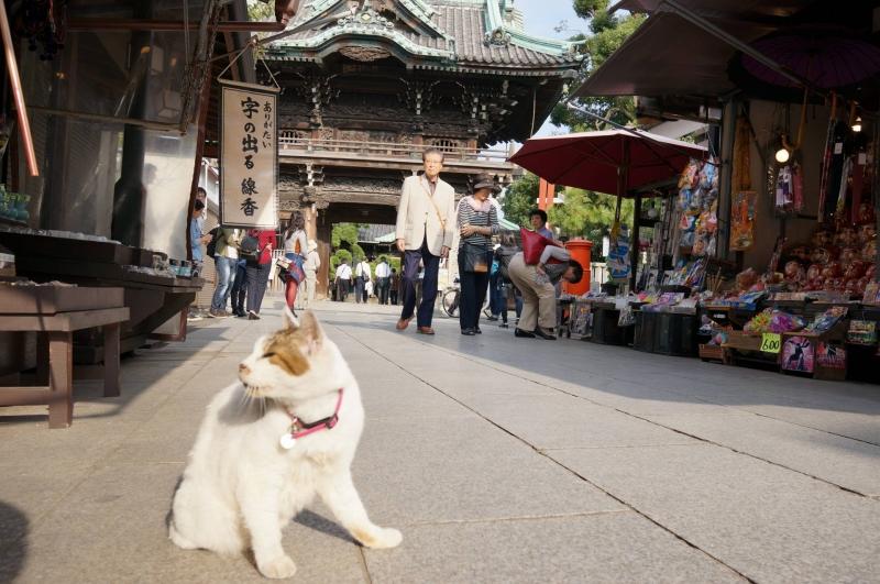 Main temple of Shibamata, Shibamata Taisyakuten, frequently visited by local believers