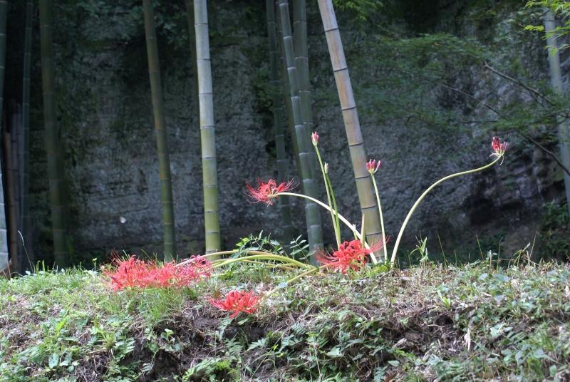 Jochiji Tempel, Kita-Kamakura