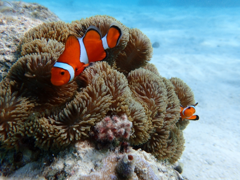 3.5H: Snorkeling tour to Maboroshi island with private guide(AM/PM)