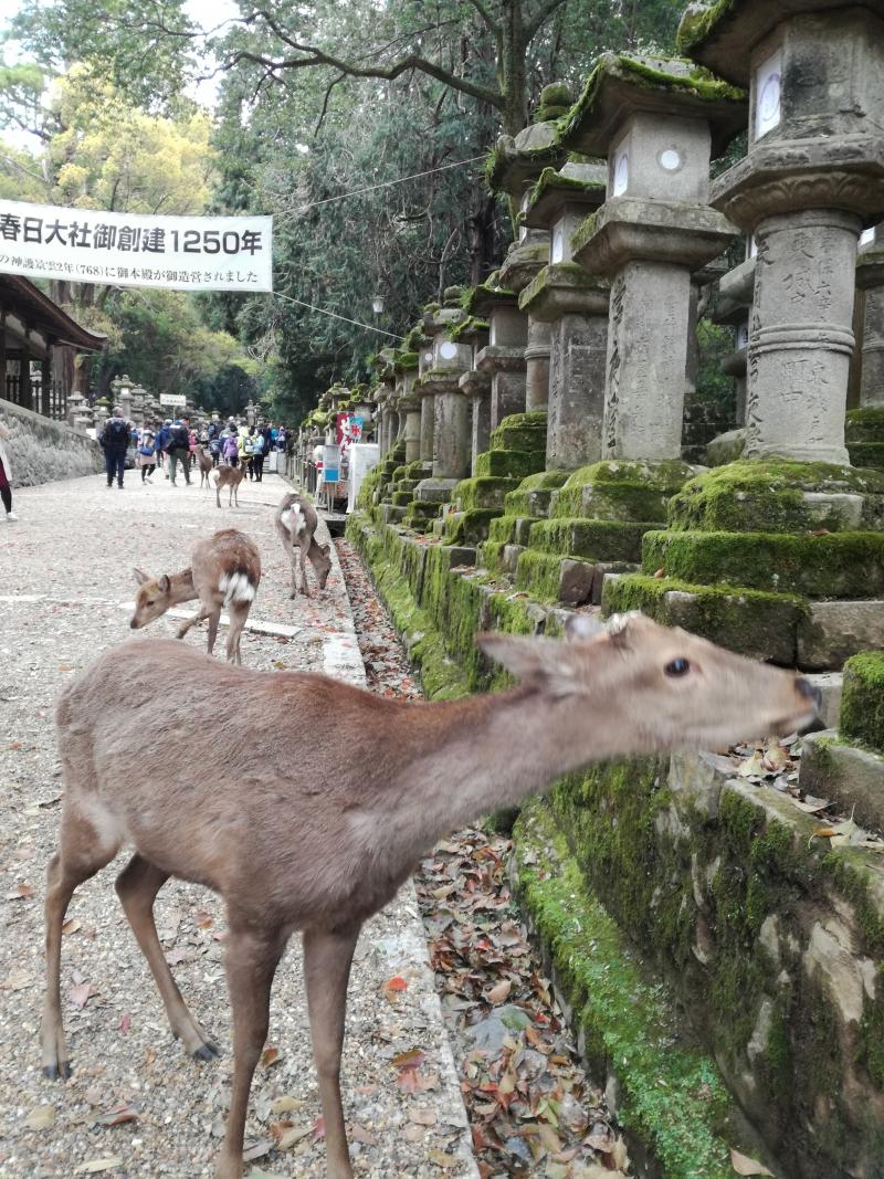 Kasuga Schrein, Nara