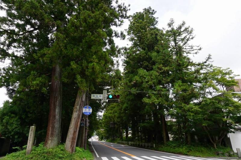 Row of 300 years old Japanese cedars leading to Toshogu shrine
