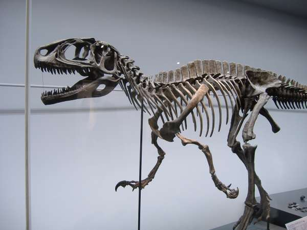 A fossilized skeleton on a dinosaur.