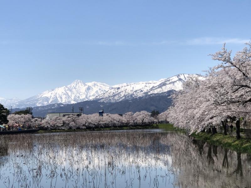 Cherry blossoms in Takada Park