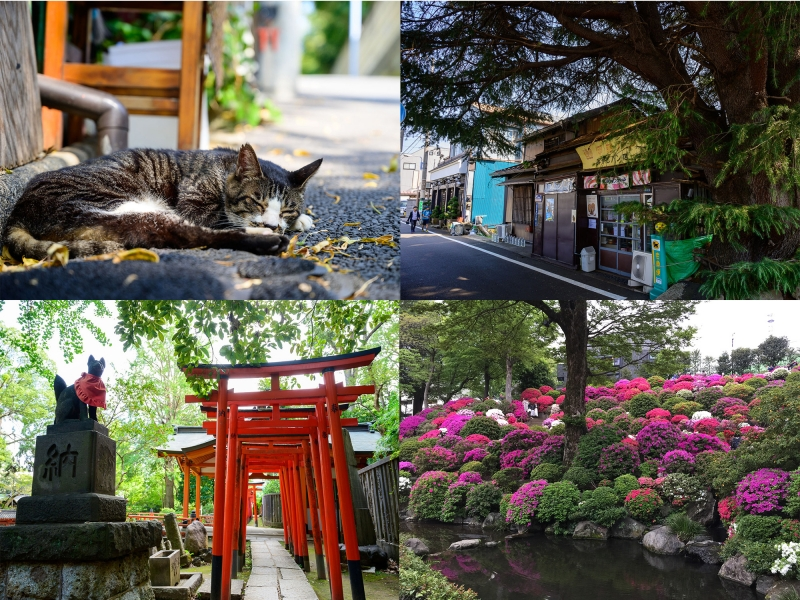 (A) Yanaka - known as cat town, a lot of cute cat items can be found in this charming town.