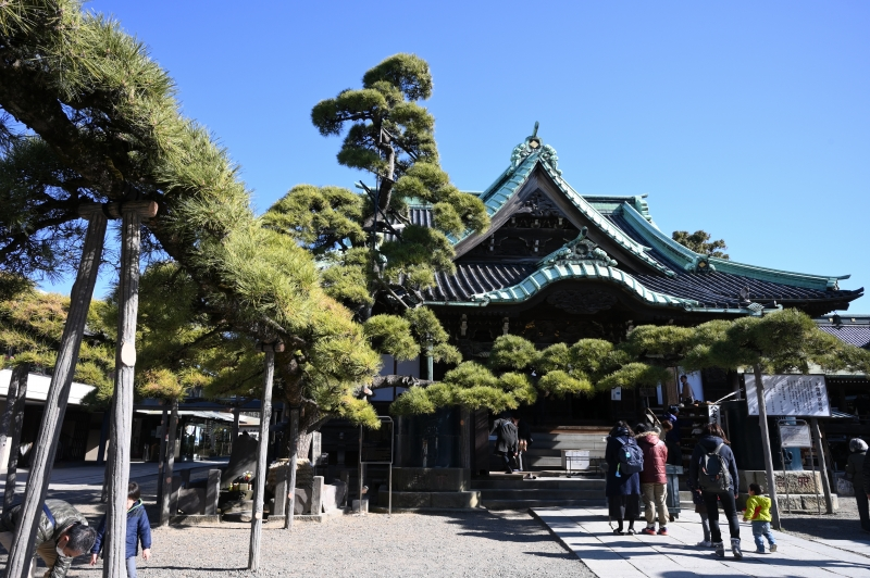 (D) Shibamata - Taishakuten temple is impressive with 500 year-old, large black pine tree which looks like a dragon.