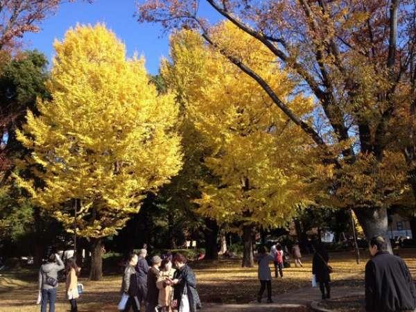 Ueno Park 11/27/2014