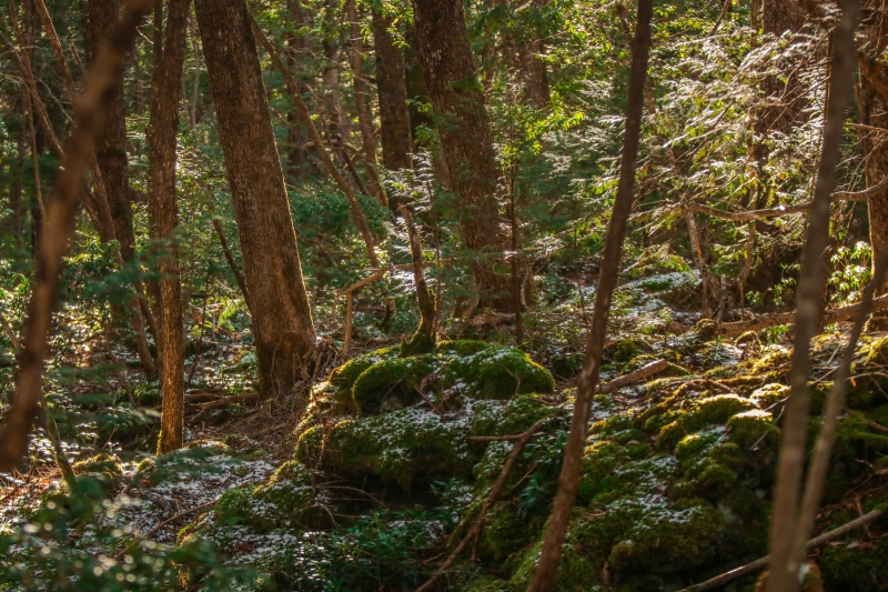 Aokigahara Suicide Forest | Educational Tour