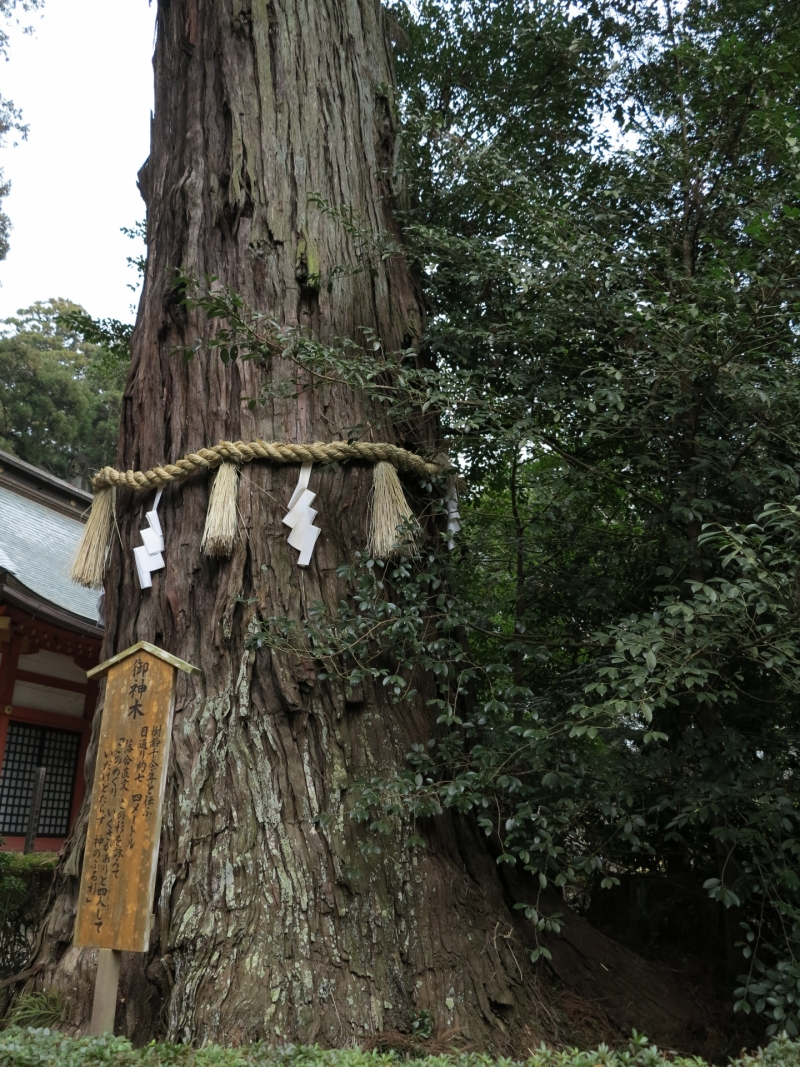 Famous shrines (Power spots) Group Tour (Semi Private) with Driver