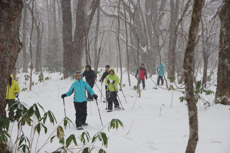 Snowshoeing in the forest of  Myoko-Togakushi renzan National Park