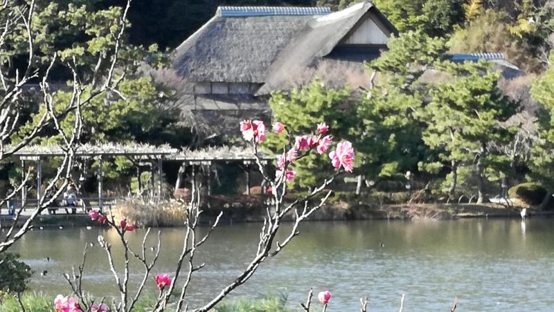 Japanischer Garten Sankei-en Garten